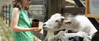 18.10.14 Cogges goat image